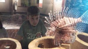 Charleston 9 Aquarium w